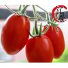批发丹东特产绿色健康新鲜东港圣女果油柿子409小柿子水果柿子