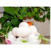 农家散养新鲜土鹅蛋草鹅蛋 4元/个 学生孕妇营养必备品