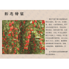 西藏土特产 极品红枸杞子 正品贡果原生态