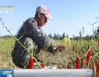 粮农组织呼吁发展可持续农业 (98播放)