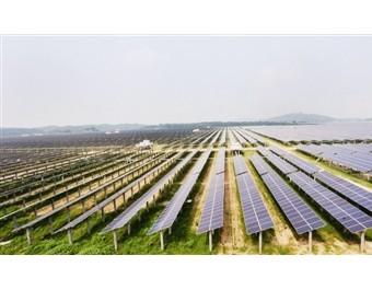 既发电又种菜 各地推进光伏农业 (111播放)