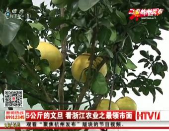 5公斤的文旦 看浙江农业之最领市面 (173播放)