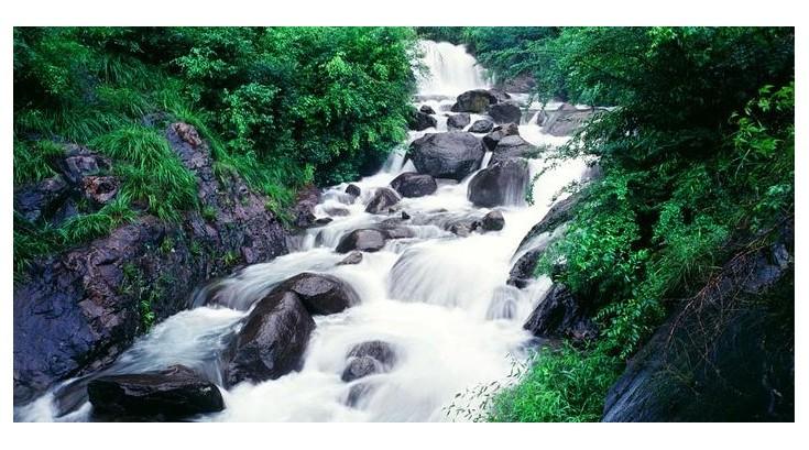 桐庐大奇山国家森林公园 (4)