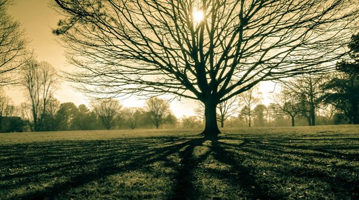 村庄里的那些树 (4)
