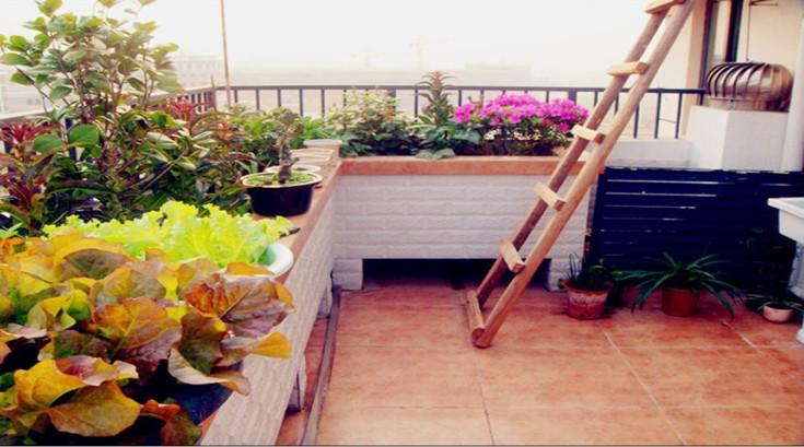阳台绿化效果惊人 (2)