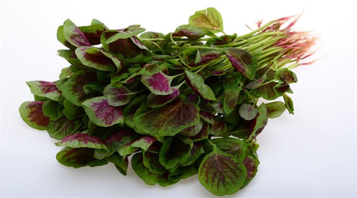 """有红有绿的""""长寿菜""""——苋菜 (4)"""