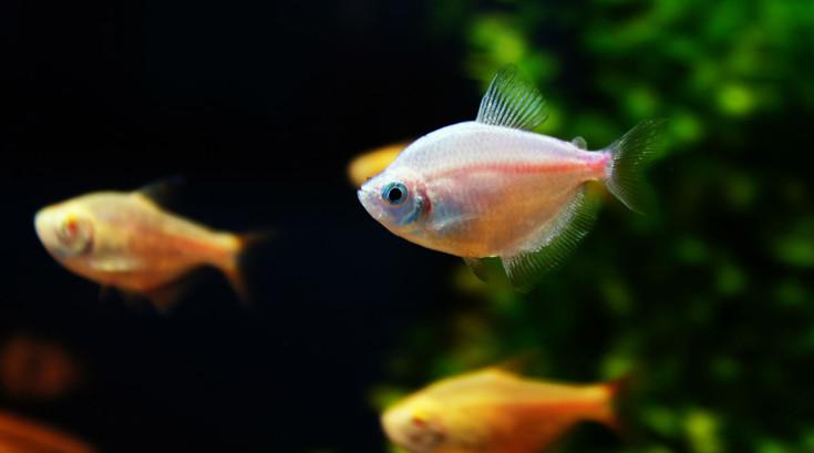 鱼缸养鱼方法 (4)