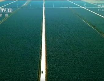 江苏:科技富农 打造农业发展新引擎 (990播放)
