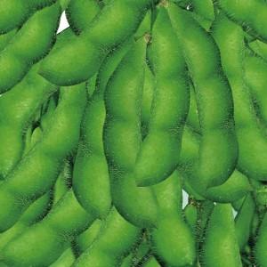 新3号 菜用大豆种子 利丰牌500克