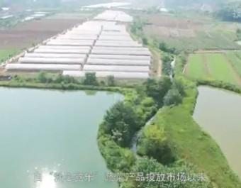 爱心觉乐-新型农业类企业宣传片 (882播放)