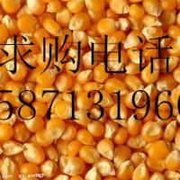 求购玉米大麦棉粕